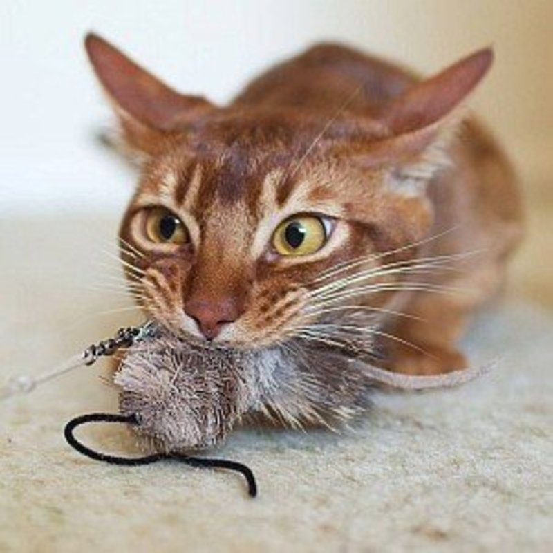 Purrs Skitter Mouse