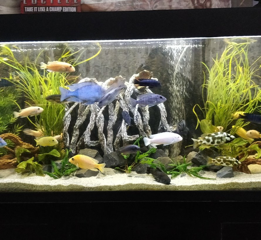 Planten aquaria led verlichting  (dubbele ledstrip) alle lengtes waterdicht. Scroll naar beneden voor de lengtes boven de 125 cm.