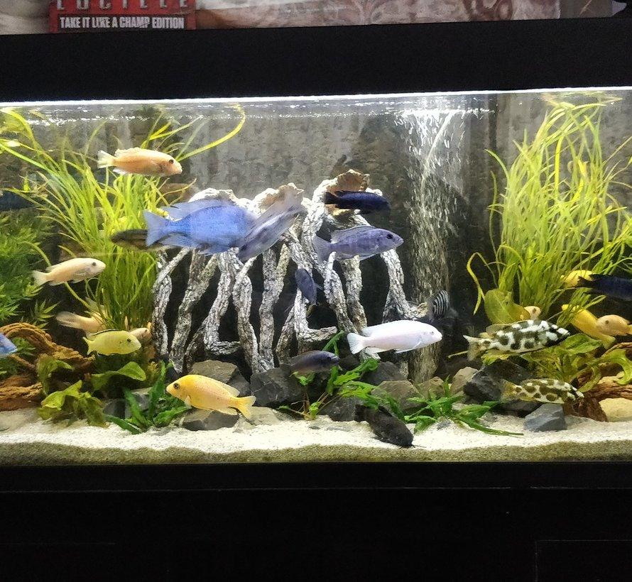Cichlide aquarium LED verlichting  (dubbele ledstrip) alle lengtes waterdicht.