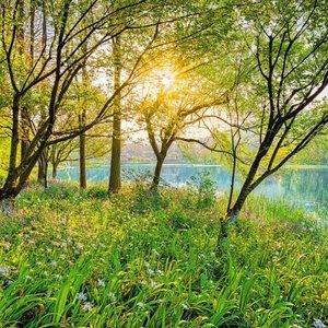 Komar Fotobehang    8-524   Spring Lake