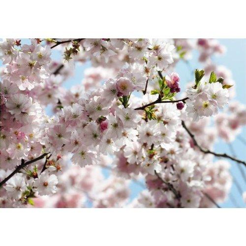 Komar Foto behang  8-507   Spring