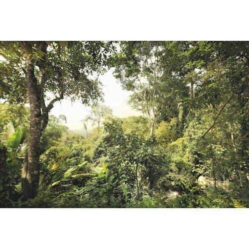 Komar Fotobehang  vlies XXL4-024 Dschungel