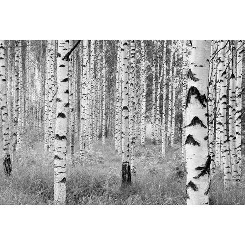 Komar Fotobehang  vlies XXL4-023 Woods