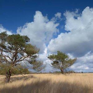 Noordwand  Holland Fotobehang Hoge Veluwe 0114