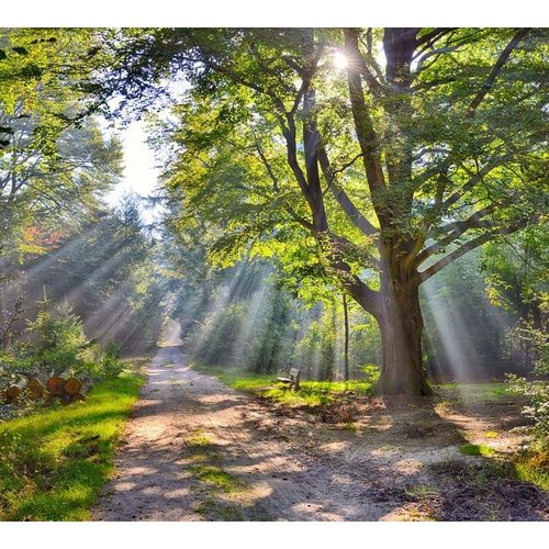 Noordwand  Holland Fotobehang Sysselt Herfstsfeer 5259