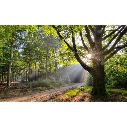 Noordwand  Holland Fotobehang Beukenboom met Bank 9729