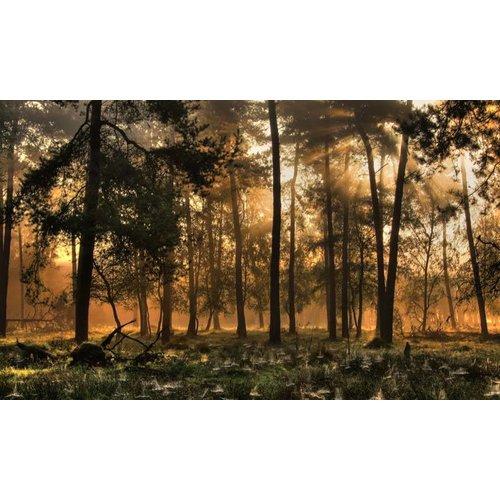 Noordwand  Holland Fotobehang Herfstochtend 0224