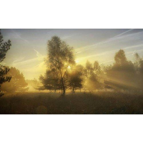 Noordwand  Holland Fotobehang Herfstochtend II 4611