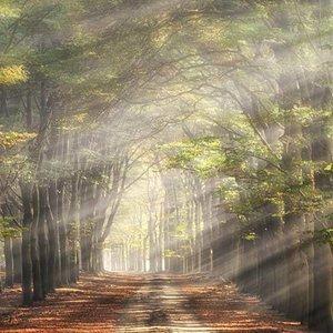 Noordwand  Holland Fotobehang Beukenlaantje in de Herfst 4714
