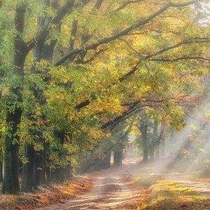 Noordwand  Holland Fotobehang Boslaantje in de Herfst 4783