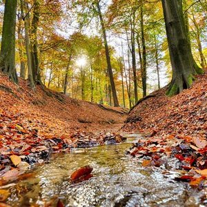 Noordwand  Holland Fotobehang Bosbeek Herfst 6604