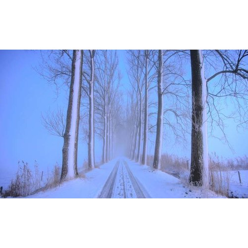 Noordwand  Holland Fotobehang Winterochtend II 9836