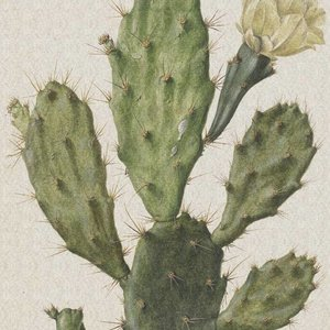 Dutch Painted Memories Mural Blooming Cactus 8013